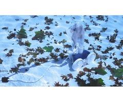 Using 8 Pool Cleaning Reseda Strategies |Stanton Pools