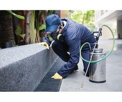 arizona termite control,arizona pest control companies
