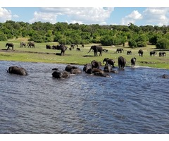 Get the Best Tour Packages to Zimbabwe