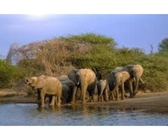 Get the Best Tour Packages to Zimbabwe | free-classifieds-usa.com