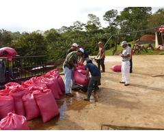Coffee farm for sale | free-classifieds-usa.com