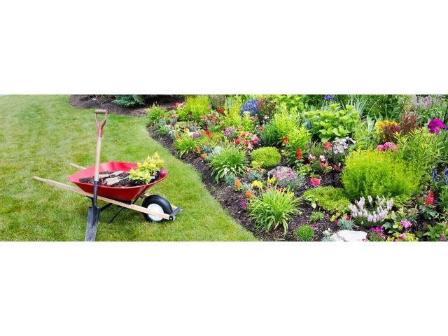 Yard Cleanup Services Ocala (ocala, Florida, USA) | free-classifieds-usa.com