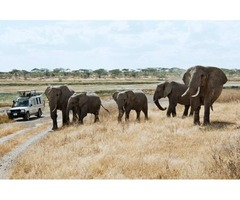 Victoria falls and chobe packages