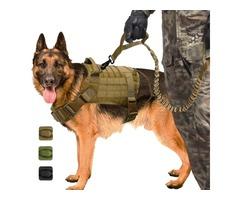 Buy dog accessories online