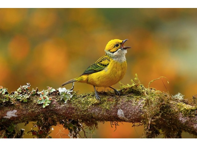 Florida Birds Photography Tour and Workshops By Don Mammoser | free-classifieds-usa.com