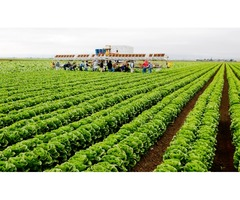 Agriculture Packaging Supplier
