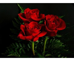 Get the Best Roses for Any Occasion | free-classifieds-usa.com