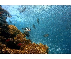 Deep Sea Fishing Florida | free-classifieds-usa.com