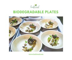Indoor and Outdoor Party Plates