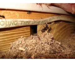 Are you looking for Carpenter Ant Treatment for your home or Office?