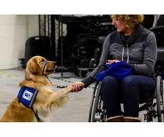 Custom Service Dog