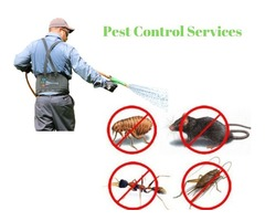 Pest Control Rutland MA