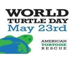 World Turtle Day Celebration