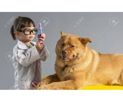 A Dog's Life Saver