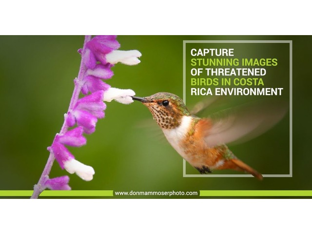 Birds Photography Tours & Workshops By Don Mammoser | free-classifieds-usa.com