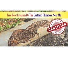 Tree Root Invasion by the Certified Plumbers Near Me