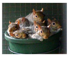 Useful tips to keep squirrels out of Garden