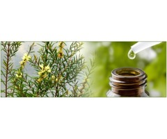 How Tea Tree Oil is Prepared and What Are Its Benefits?