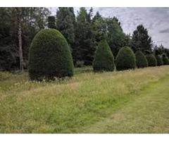 South Bend Tree removal | free-classifieds-usa.com
