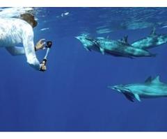 Private Dolphin tours Oahu | free-classifieds-usa.com