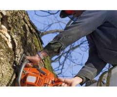 Partners Tree Service And Stump Grinding