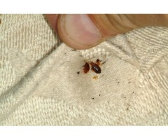 Get Rid of Bed Bugs Fast and Easy