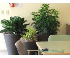 Office plants at your door step | free-classifieds-usa.com