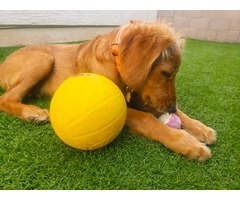 Artificial Grass for Play Area and Pets