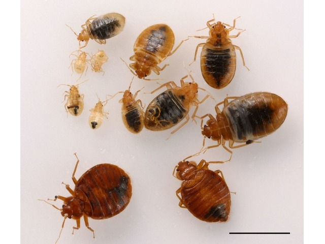 Best Bed Bug Heat Treatment Services in California | free-classifieds-usa.com