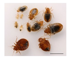 Best Bed Bug Heat Treatment Services in California