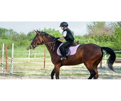 Horse Riding School Los Angeles | FinLindia Equestrian