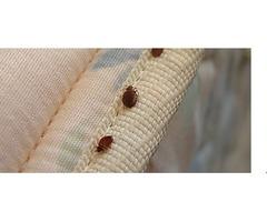 Bedbug Treatment Queens