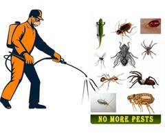 Hire a Pest Management Company Now