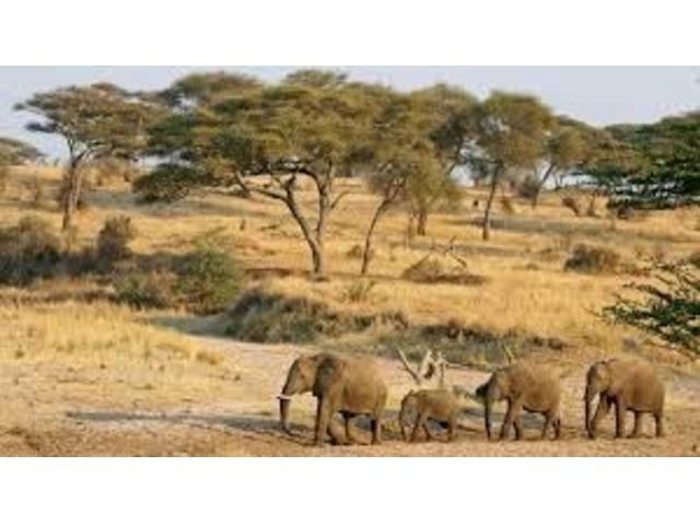 AfricatoursandsafarispackagebyAfricaIncoming
