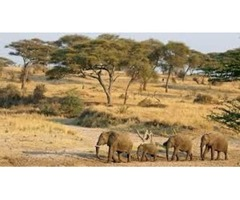 Africa tours and safaris package by AfricaIncoming