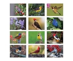 Bird Calendars