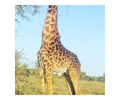 Tanzania Wildlife Safaris