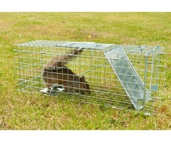 Use the Best Squirrel Traps for Attic to catch Squirrel