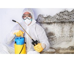 Best Mold Inspection Naples FL | free-classifieds-usa.com