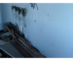 Best Mold Removal & Inspection Service Company in Savannah, GA