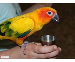 Parrot Essentials Coupons For Big Discounts