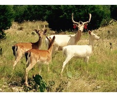 Hill Country Hunting | Texas Land For Sale