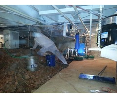 Crawl Space Mold Removal Specialist in Greenville, SC – Array of Solutions