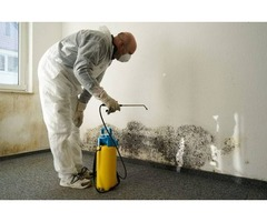 Mold Inspection in Naperville IL