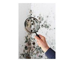 Mold Inspection in Naperville IL | free-classifieds-usa.com