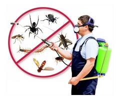 Bees Control Service Miami Dade FL