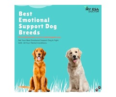 How To Get Best Emotional Support Dog For Mental Condition