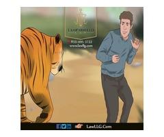 Law Tiger Attorney