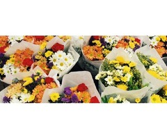 Celebrate Your Special Occasion With The Special Wholesale Flowers