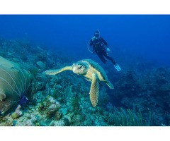 Reach Grand Cayman For The Most Engaging Scuba Diving Vacations